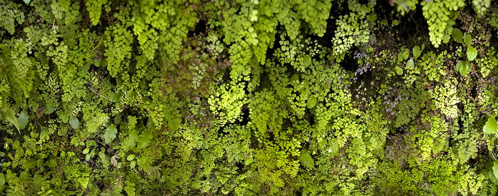 Oahus' Moss 2008