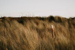 20190910 - Hierbas de las dunas - © Chan