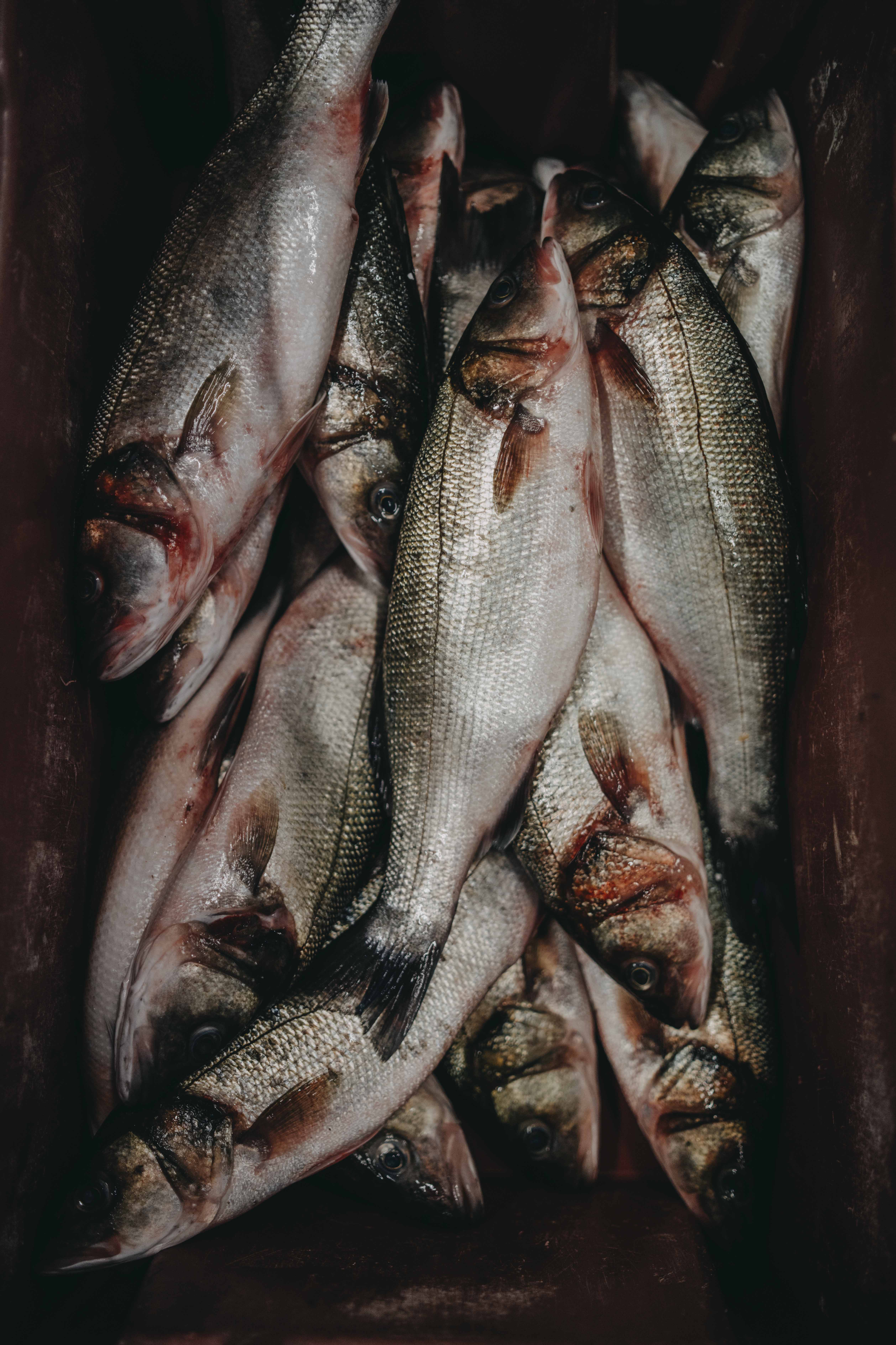 201600406_-_Food_Inspiration_-_Restaurant_Inter_Scaldes_-_©_Chantal_Arnts_22_1