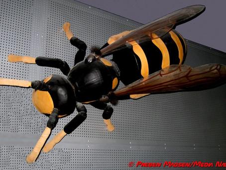 Hvepsene kommer! Tiden er nemlig inde til oprør i hvepseboet.
