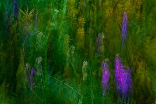 Mystical Meadow