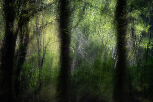 Ghosts in the Wood