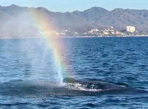 Whale Watching Bahia de Banderas