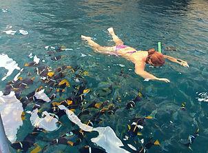 Snorkeling Los Arcos .jpg