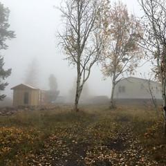 Foggy autumn