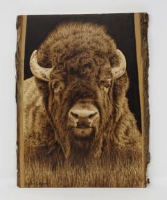 Bison portrait.jpg