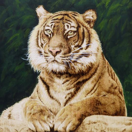 Tiger pic.jpg