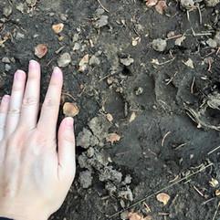 Me finding bear tracks