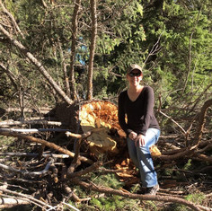 Minisa with broken tree