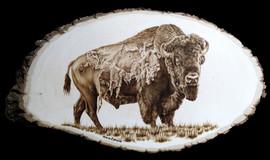 Bison For Harry Gilbert 1.jpg