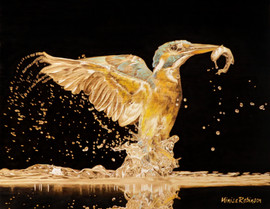 Kingfisher-color.jpg