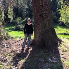 Harvesting trees Minisa