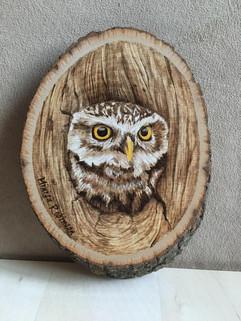 peek a boo owl.jpg