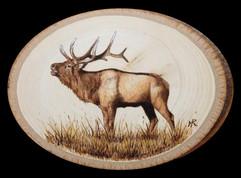 Small elk oval.jpg