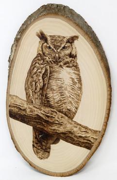 Owl on branch.jpg