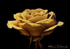 Yellow Rose 5X7.jpg