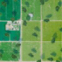 조태광, 떠도는 숲, 91×91cm, 린넨에 아크릴, 2020.jpg