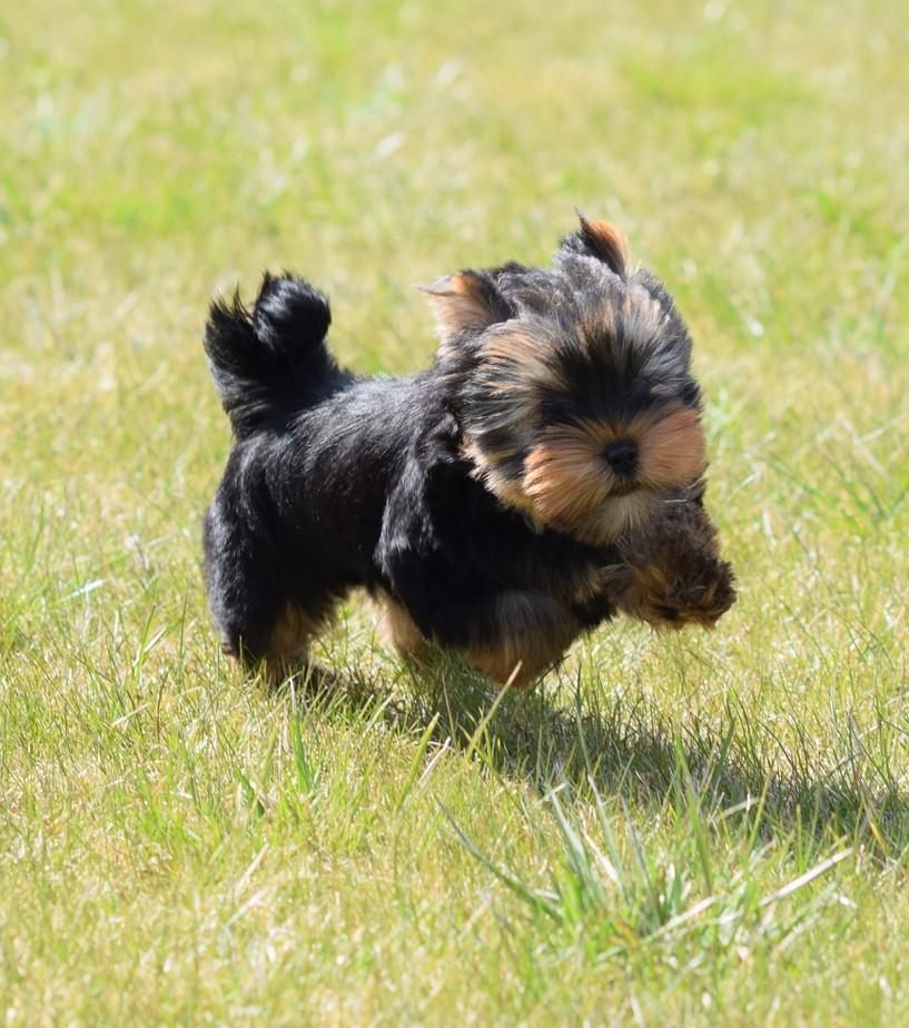 Puppy Greta