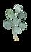 Eucalyptus1.png