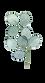 Eucalyptus2.png