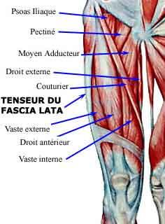 tenseur-fascia-lata.jpg