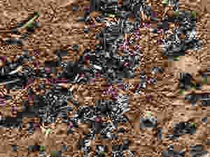 Billes de Polystyrènes - plage de Marina Viva - Nov 2018