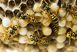 WASP NEST REMOVAL DERRY