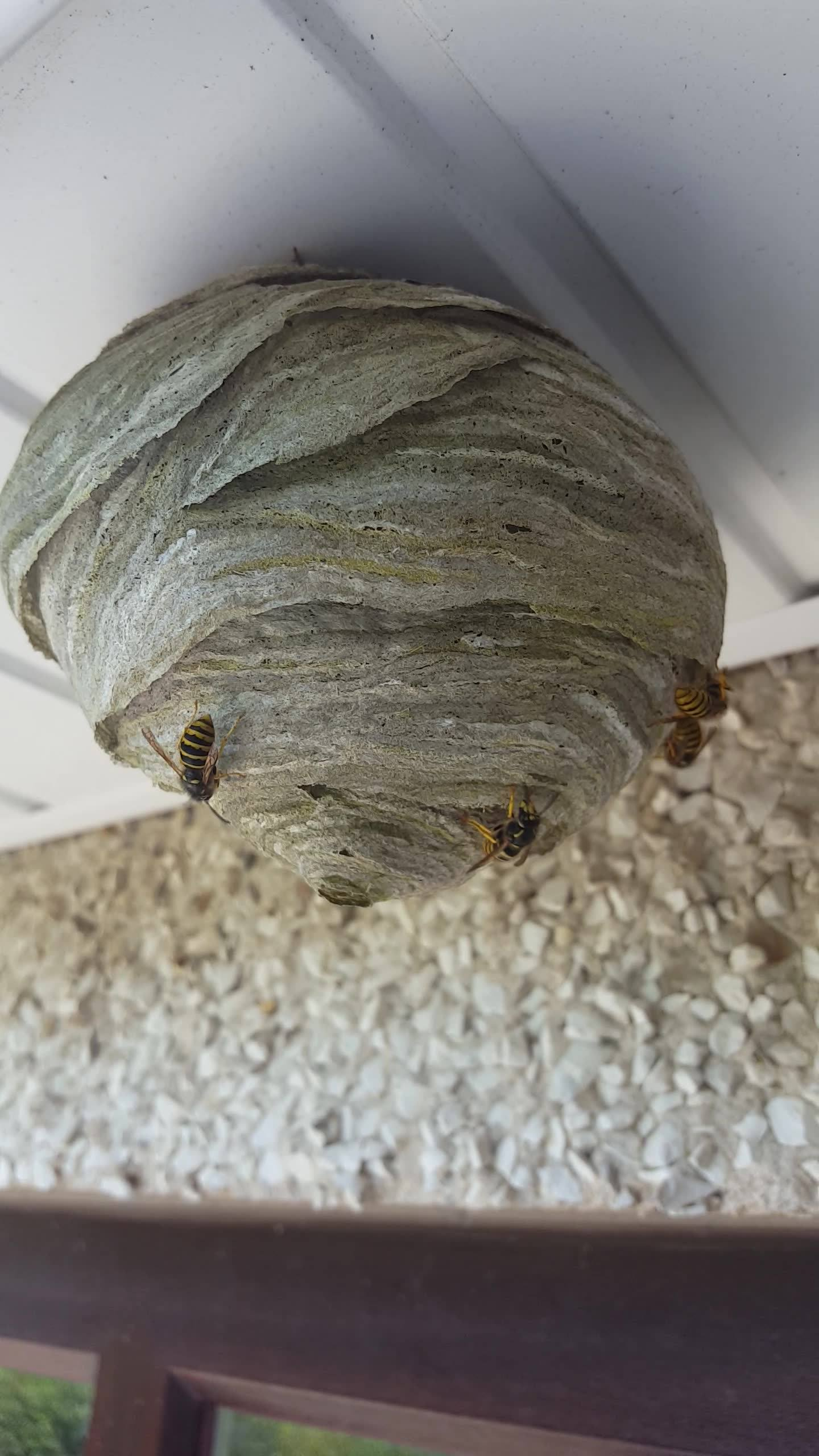 Wasp nest removal Same day service Pm or call 07759068929 Like and share plz