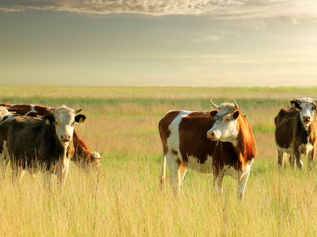 7 Tips For Profitability in The Cattle Business