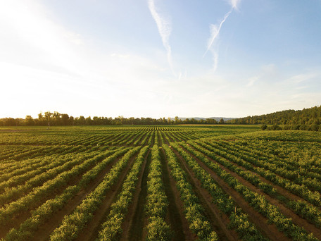 5 Ways Automation Has Transformed Farming