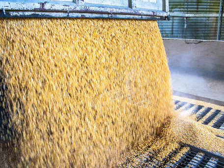 How Is Animal Feed Made? Grain Processing 101