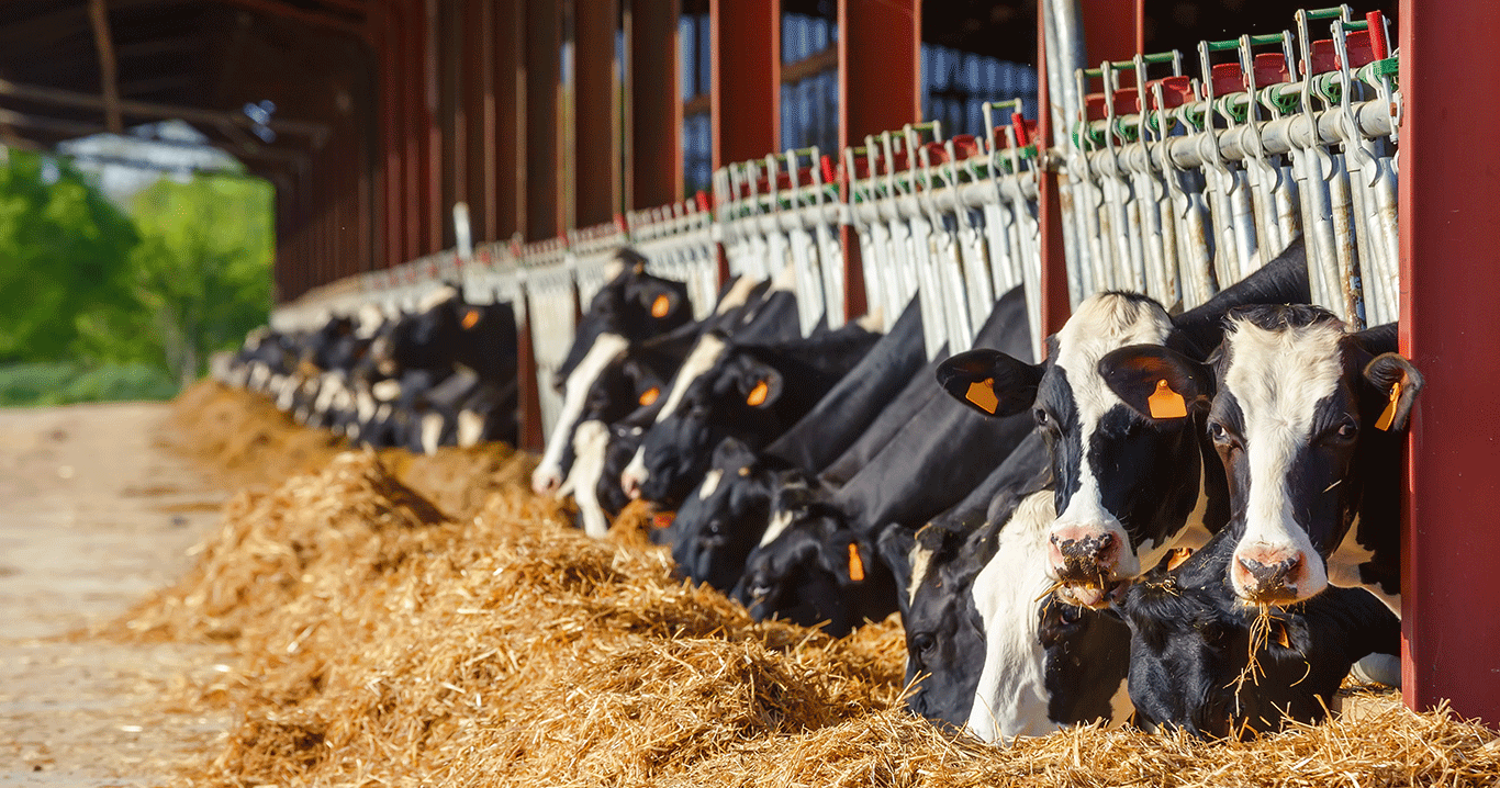 Dairy-Cows_Feed_GettyImages-679531082.pn
