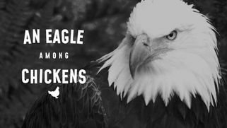 An Eagle Among Chickens