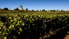 Vineyard-Windmill.jpg