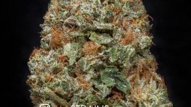 Death cookies 🍪 hybrid 84% sativa 16% Indica THC 24
