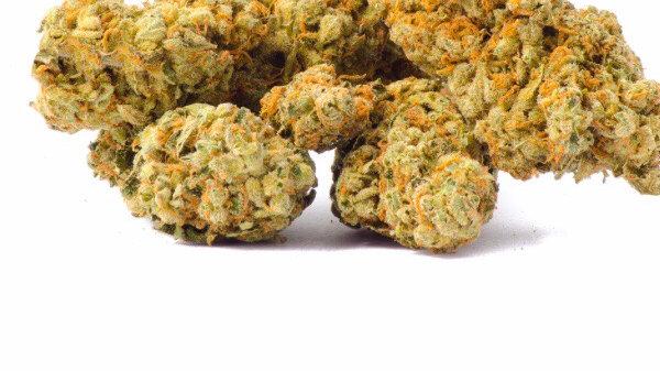 Red Congo pure sativa %100 sativa THC 28 sale