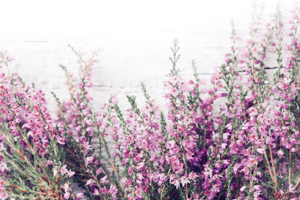 Purple Heather Floristry1_edited.png
