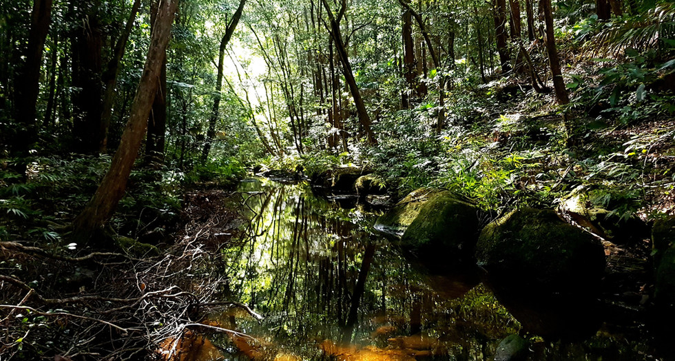 Bellbird track in Strickland Forest nearby