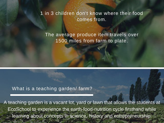 Grow Food Not Lawns!