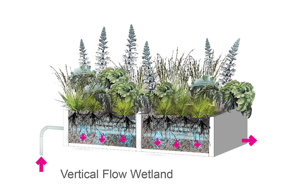 Living Machine Vertical Flow Diagram