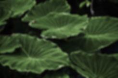 Wild Leaf Bristol. Plant deliveries Clifton, Redland, Cotham, Bedminster.