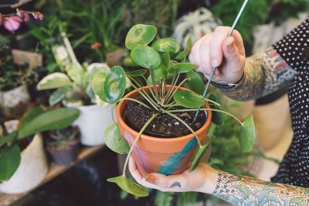 Order plants online Bristol
