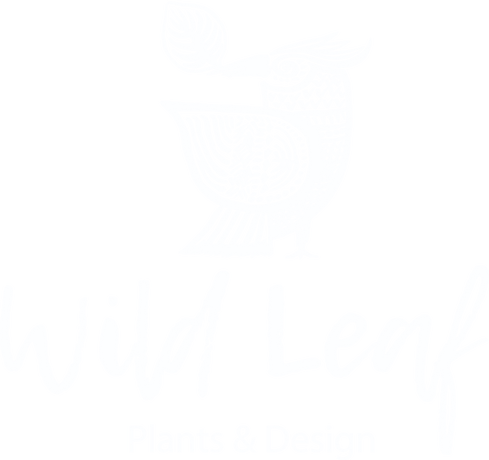 Wild Leaf, Bristol England. Indoor plant shop situated in Gloucster Road, Bristol. Wild Leaf Indoor Plants provide high quality indoor plants at competitive  rates. Customer service and quality sums Wild Leaf's mission up!
