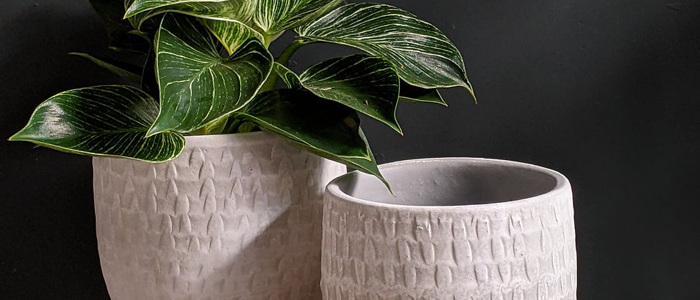 Indoor houseplant pot and basket. Indoor plant specialist. Wild Leaf offer plants for delivery in Bristol.