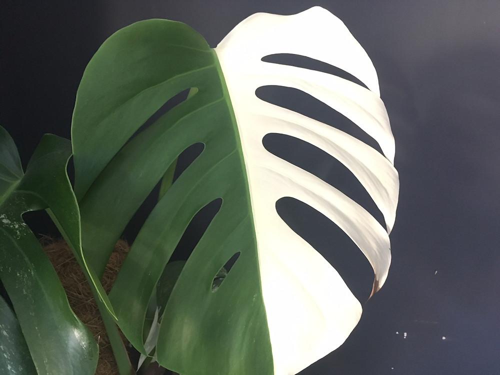 Plant care tips Bristol