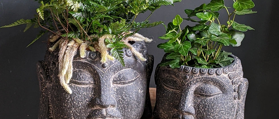Kanda Pot for indoor plants and houseplants available at Wild Leaf Bristols online store. Delivery for plant during lockdown.