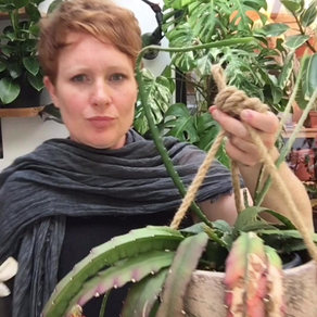 Tya's favourite rainforest cactus