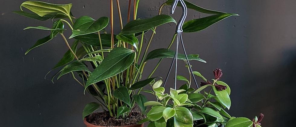 Flowering Epiphyte Duo