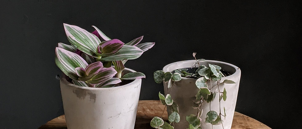 Trailing Plants & Pot Duo