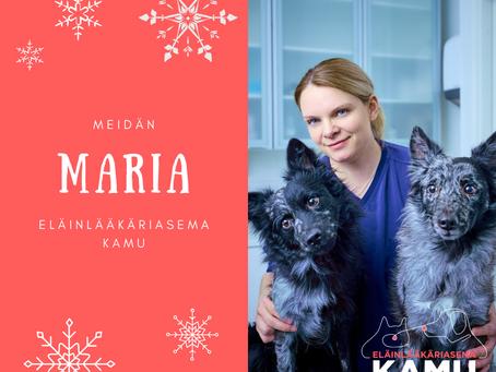 Ihopotilaiden eläinlääkäri Maria Pohjolainen vastaanottaa taas potilaita Kamussa